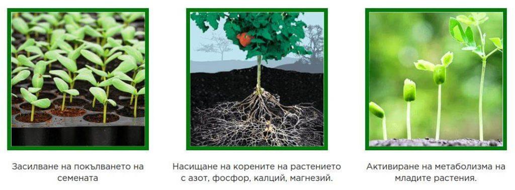 engrais Agromax croissance