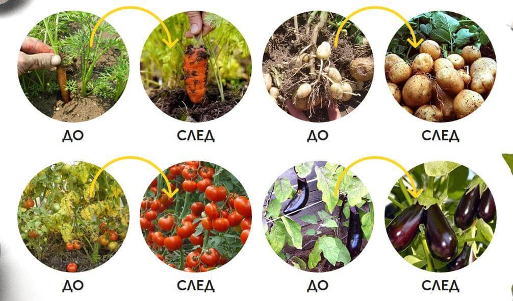 engrais agromax, résultats, effets, croissance