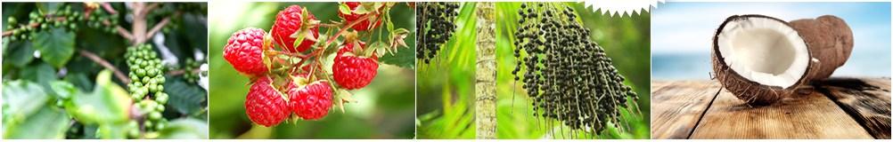composition cocoslimmer café vert, cétones, noix de coco