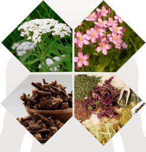 herbes et composition naturelle, achillée millefeuille, clous de girofle