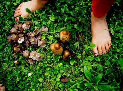 champignon, pieds