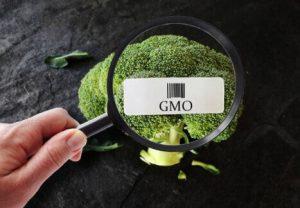 chou-fleur, OGM, loupe