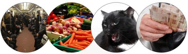 chat, argent, transport sources de parasites