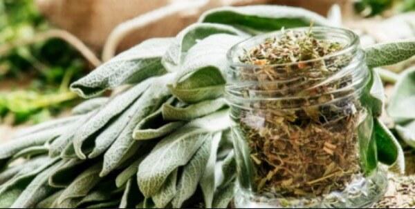 composition d'herbe d'absinthe et de sauge enivrante avormine