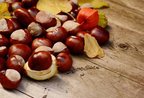 marronnier d'Inde, varices