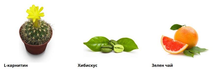 composition de 12slim l-carnitine Hibiscus Thé vert
