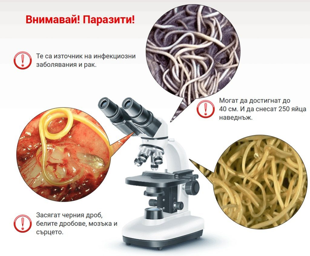 attention parasites internes microscope