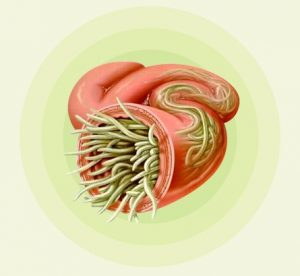 des parasites intestinaux