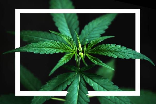 chanvre, cannabis