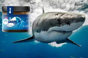 crème de requin, requin